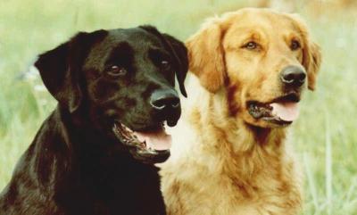 Rock Erin Kennels & Retrievers - Dog Breeder in Stillwater, OK